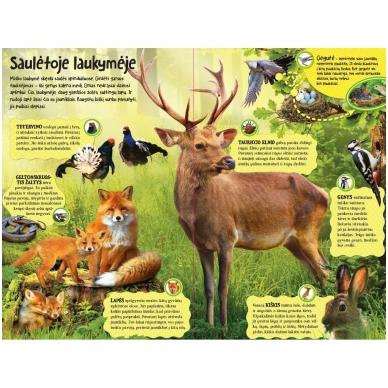 BROKAS Didžioji įgarsinta miško knyga. 50 tikroviškų miško garsų (persikreipusi) 2