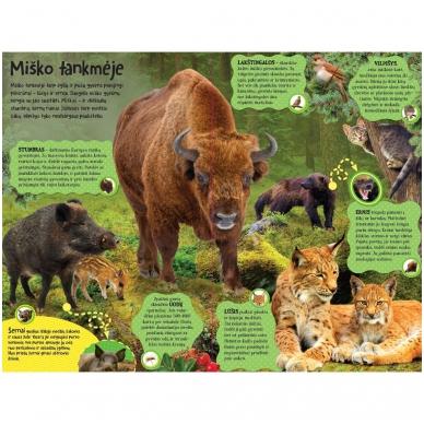 BROKAS Didžioji įgarsinta miško knyga. 50 tikroviškų miško garsų (persikreipusi) 3