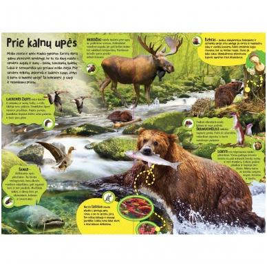 BROKAS Didžioji įgarsinta miško knyga. 50 tikroviškų miško garsų (persikreipusi) 4