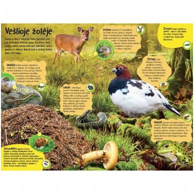 BROKAS Didžioji įgarsinta miško knyga. 50 tikroviškų miško garsų (persikreipusi) 6