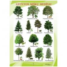 Lietuvos miškų medžiai (A2 formato)