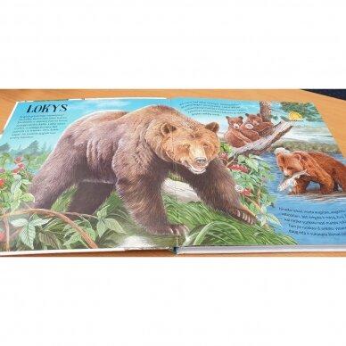Miškas. Nuostabūs žvėreliai. Su gyvūnų balsais 5