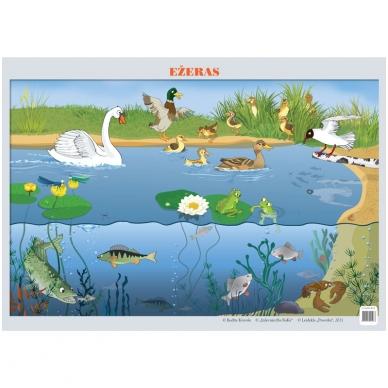 "Plakatas ""Ežeras"" (A2 formato)"
