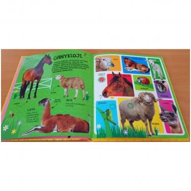Spausk ir klausyk. Triukšmingas ūkis. 60 gyvūnų balsų 9